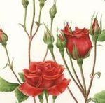roseslide1